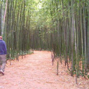 inspiratie tropische planten, bamboe en palmbomen