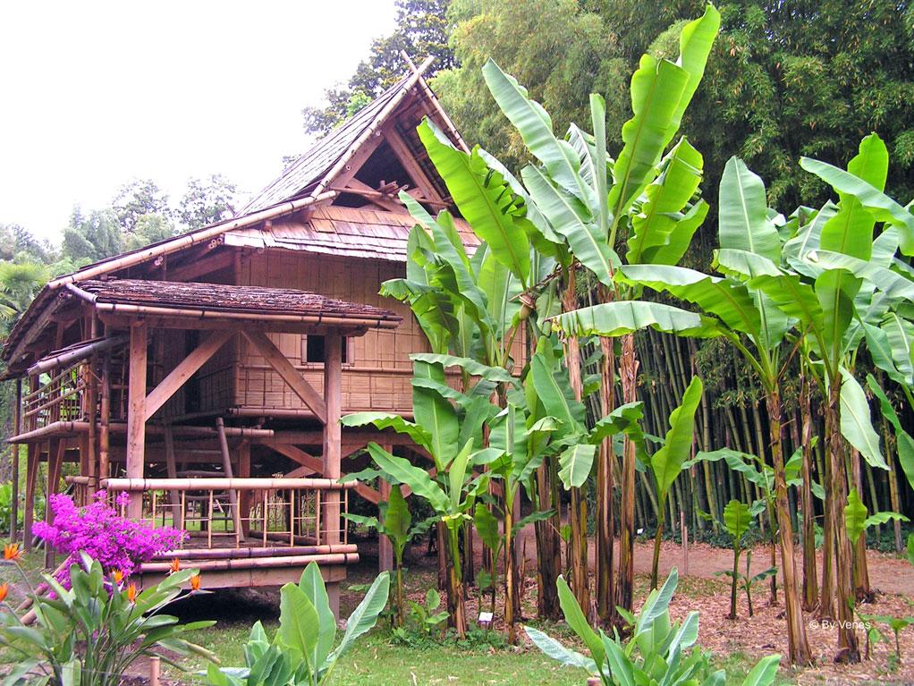 Bananenplant bamboe bos