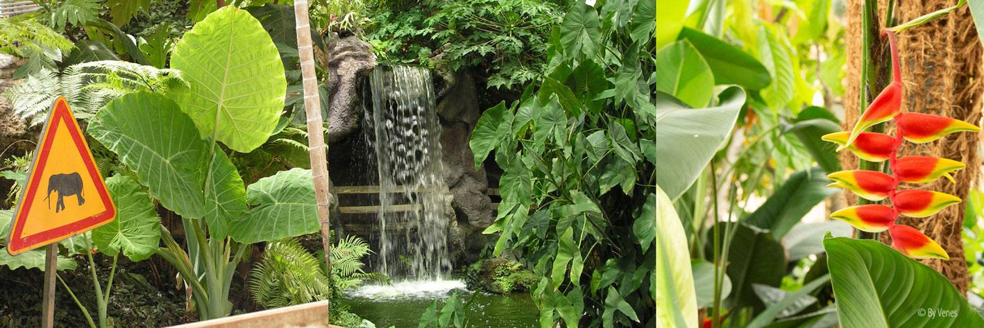 Tropische planten en Botanische tuin olifantsoor. Urban jungle