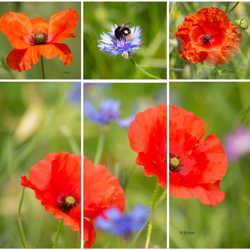 Inspiratie blog kleur in de natuur