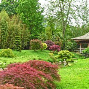 Japanse tuin bamboebos