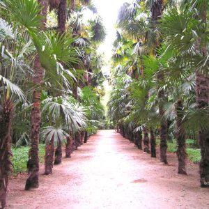 Tuininspiratie laan met palmbomen