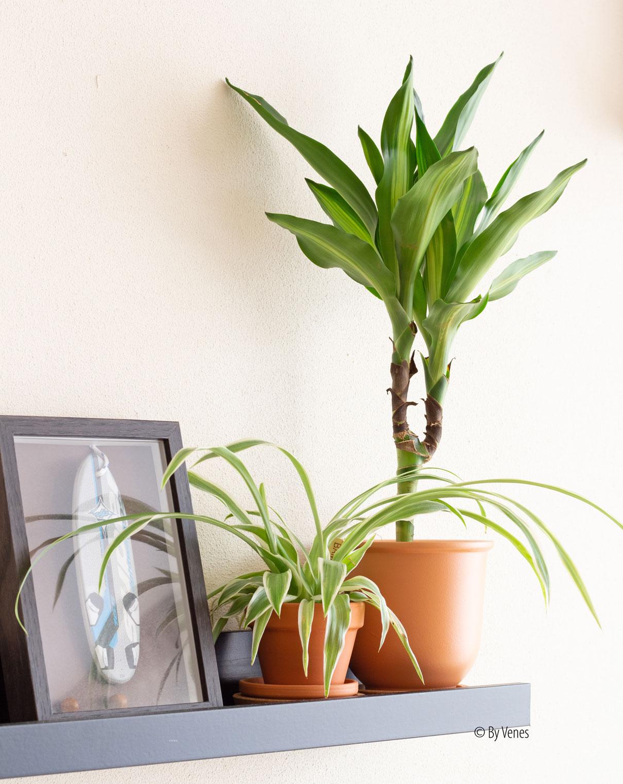 Planten op fotolijstplank stylen