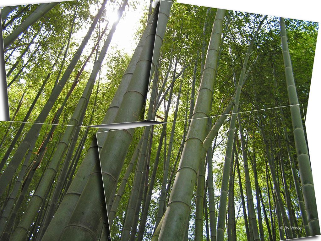 bamboe bambouseraie door By Venes