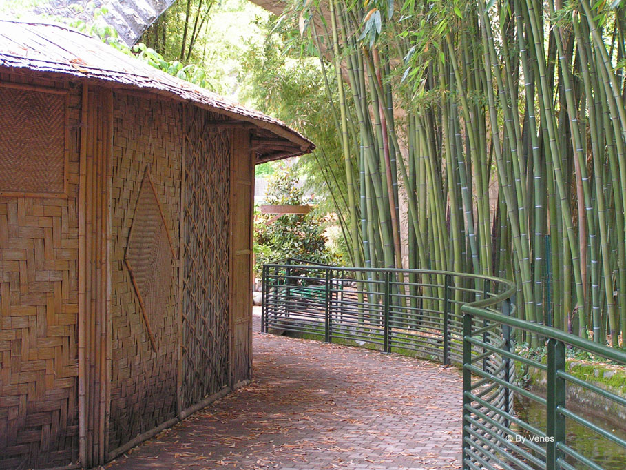 Een bos van Bamboe en tropische planten in Europa.  palmbomenbos
