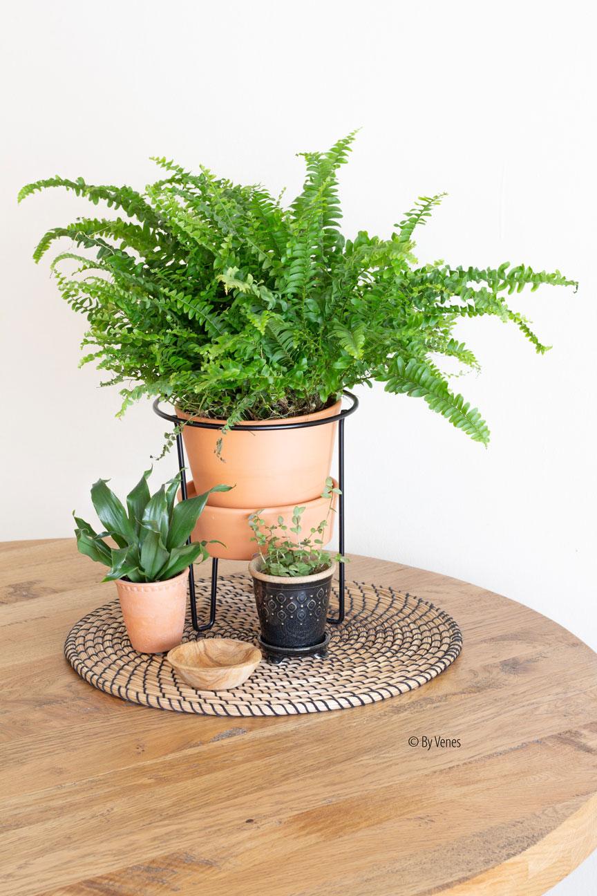 eettafel stylingtips met planten en miniplantjes