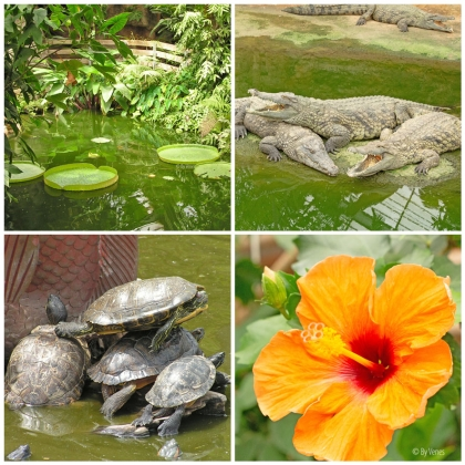 tropische planten en krokodillen botanische tuin schildpad Frankrijk