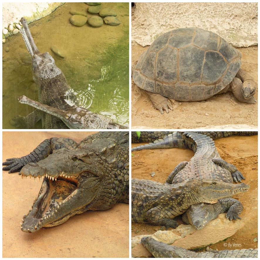 krokodillen schilpadden Pierrelatte