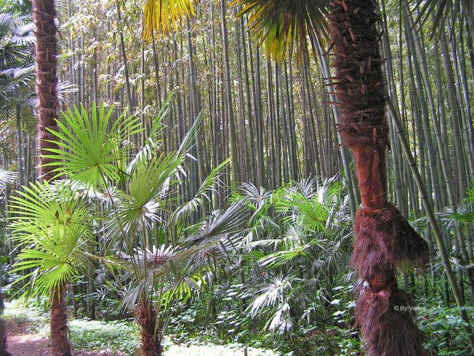 palmbomen Frankrijk