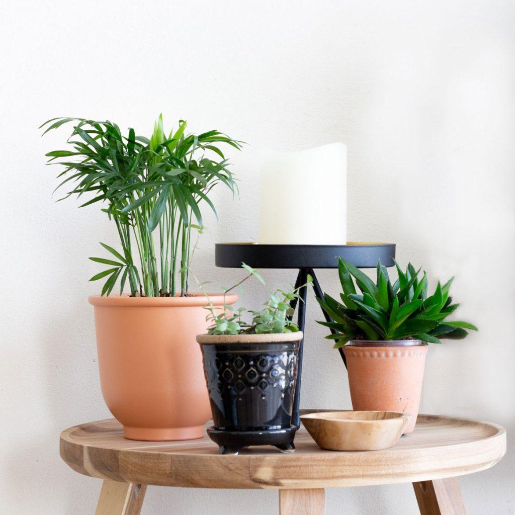 mini planten 5 stylingtips en inspiratie. serveerschaal IKEA