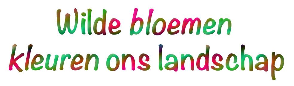 Wilde bloemen kleuren ons landschap