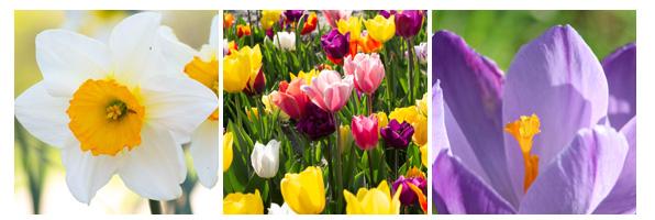 lentebloemen By Venes