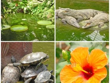 krokodillen botanische tuin schildpad Frankrijk