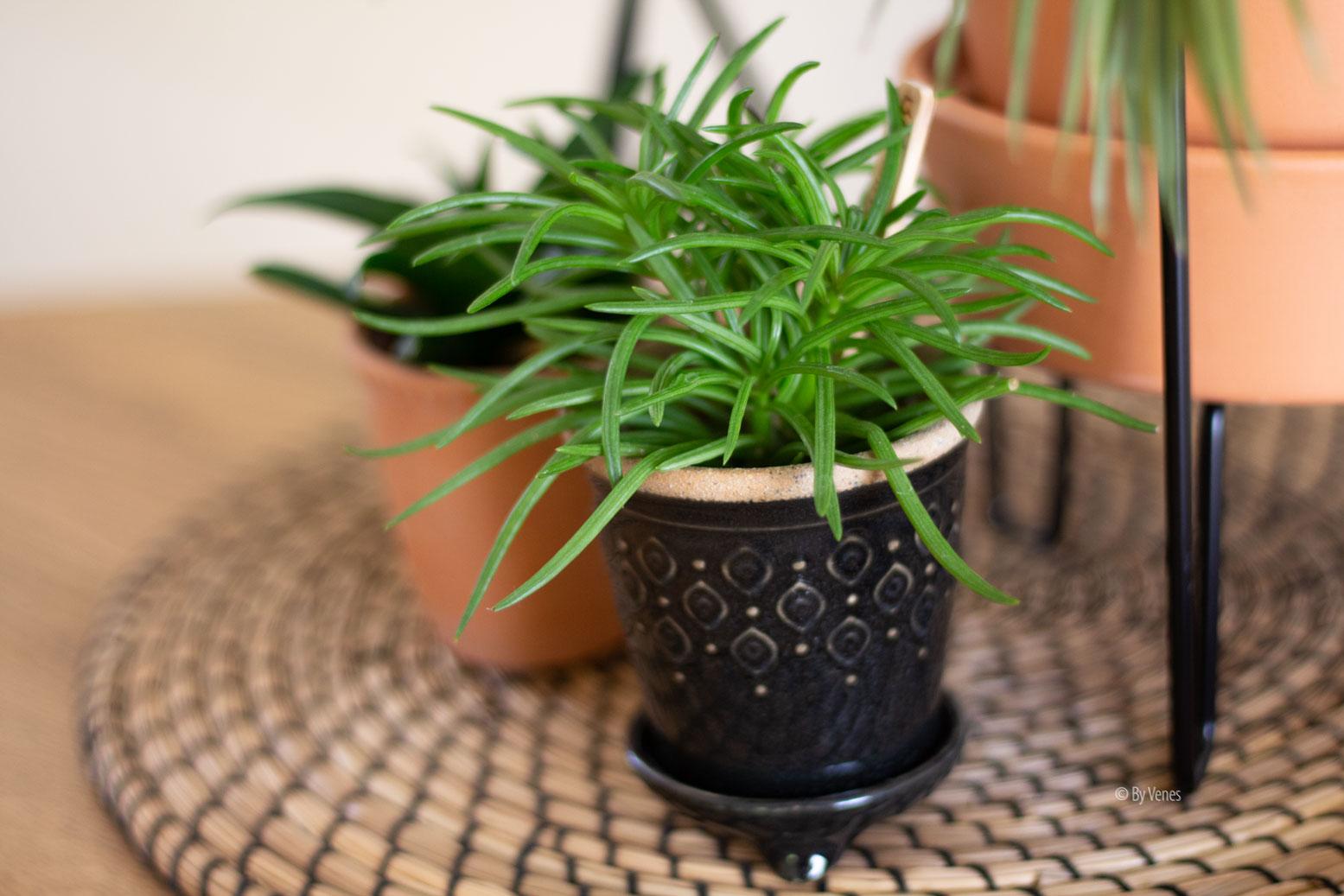 plantjes By Venes
