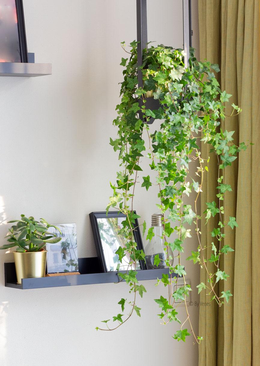 Galm of hol geluid verminderen met hangplanten